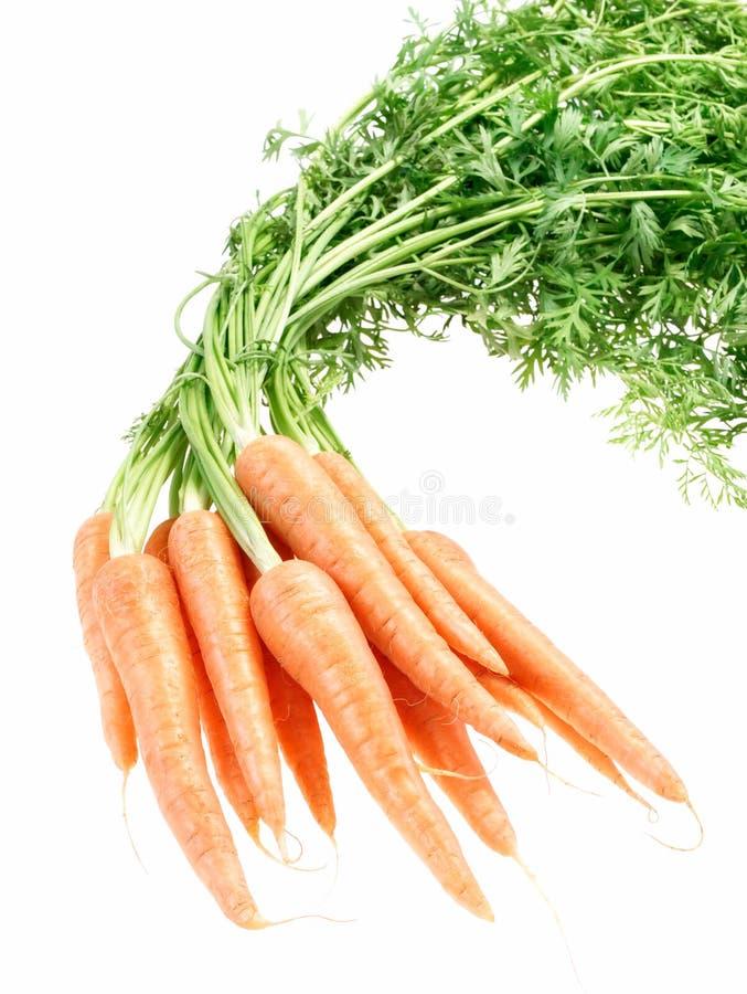 белизна морковей пука предпосылки crunchy стоковое изображение