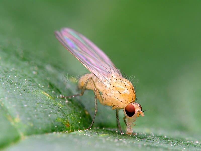 белизна мухы стоковая фотография rf