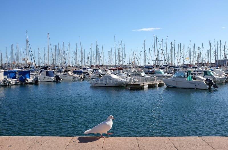 Белизна нырнула в Средиземном море на предпосылке солнечности стоковое изображение rf