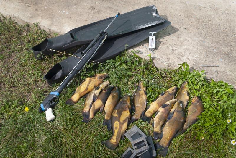 белизна оборудования предпосылки spearfishing стоковые изображения rf