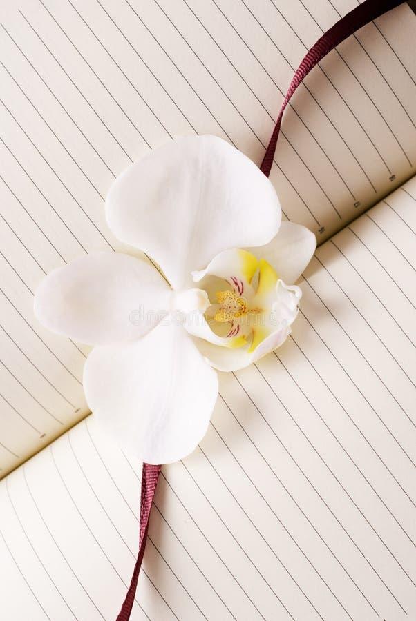 белизна орхидеи дневника стоковое изображение