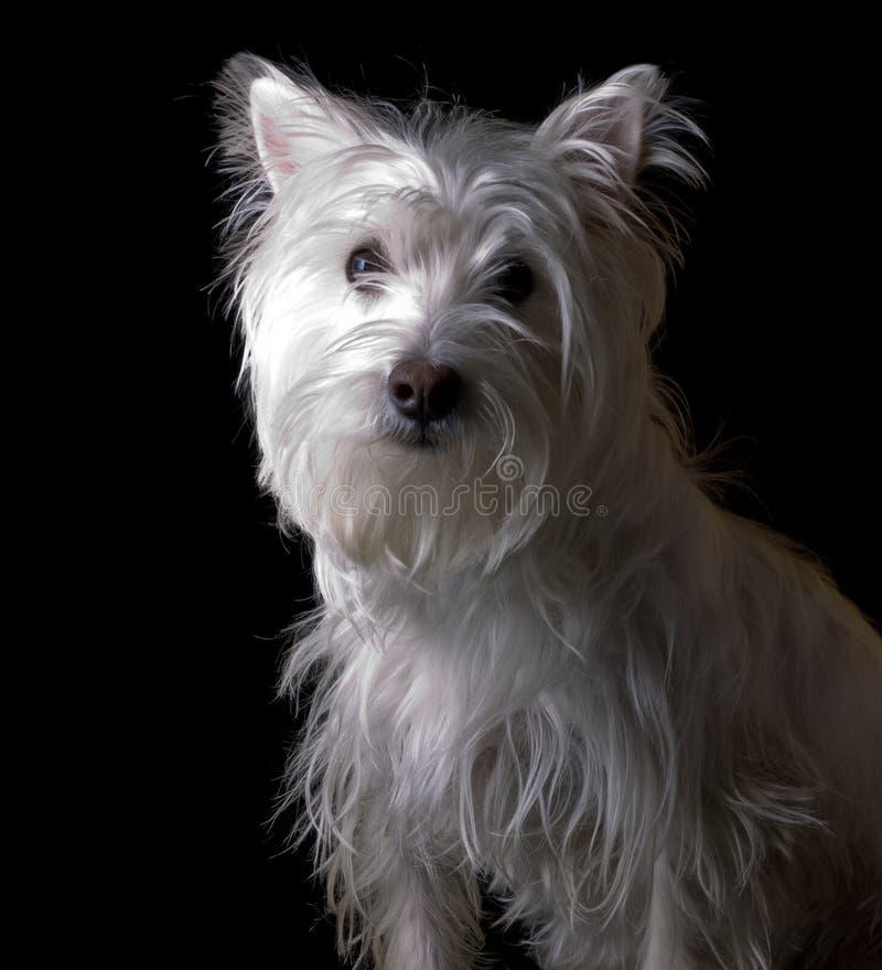 белизна освещения собаки драматическая стоковое фото rf
