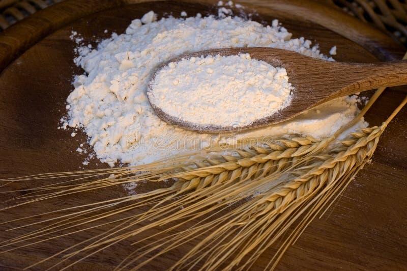 белизна пшеницы муки ушей стоковые фотографии rf