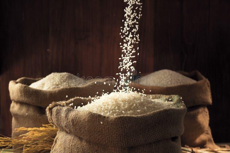 белизна риса стоковое изображение