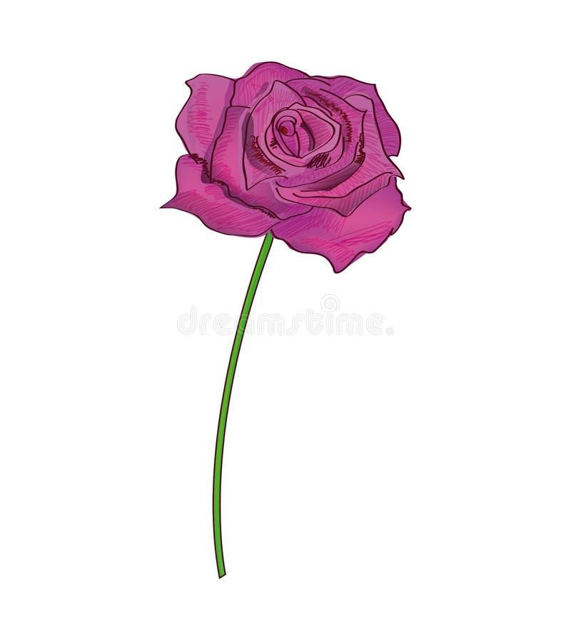 белизна розы пинка предпосылки иллюстрация штока