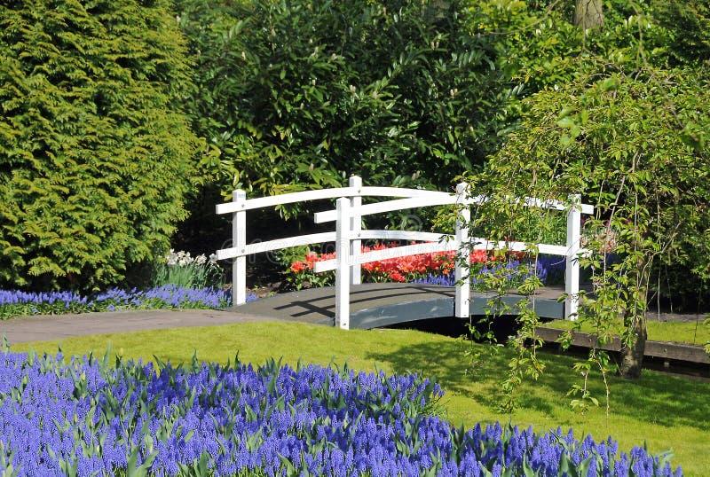 белизна сада моста голландская стоковые фотографии rf