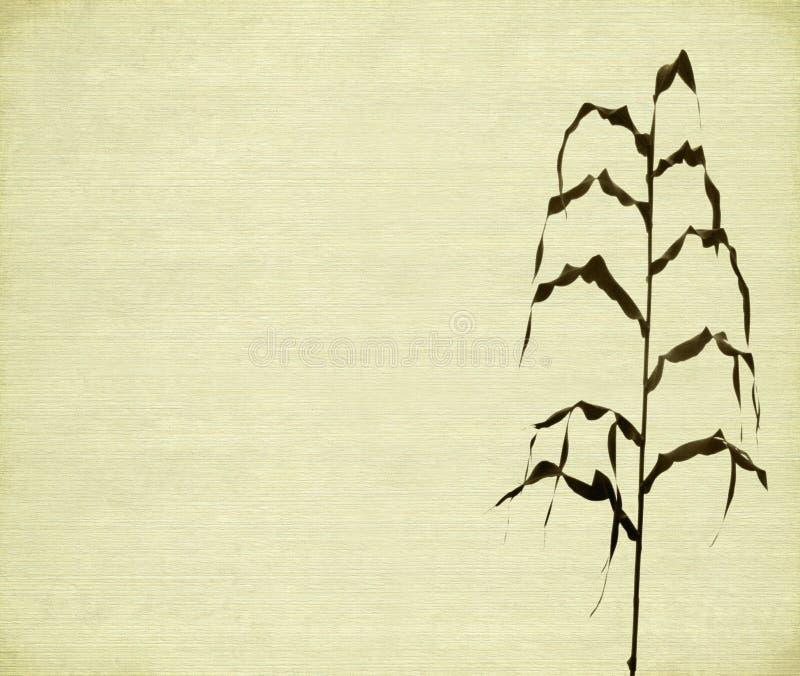 белизна стержня листьев пошущенная над печатью стоковые изображения