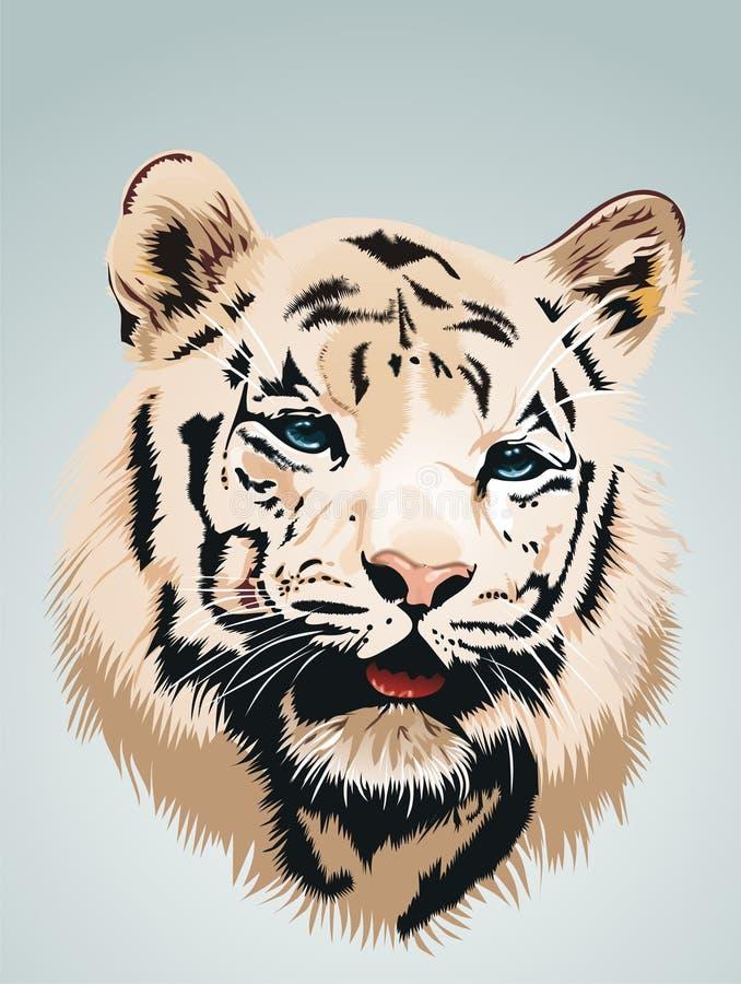 белизна тигра портрета стоковое изображение rf