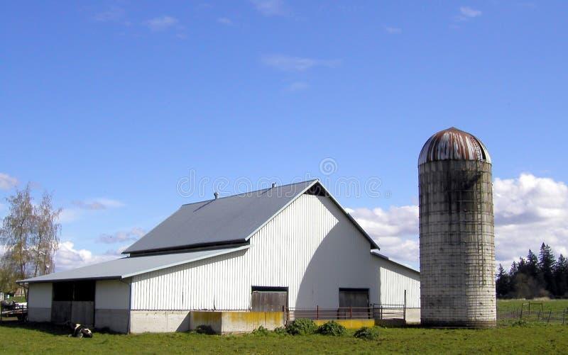 белизна фермы стоковые изображения rf