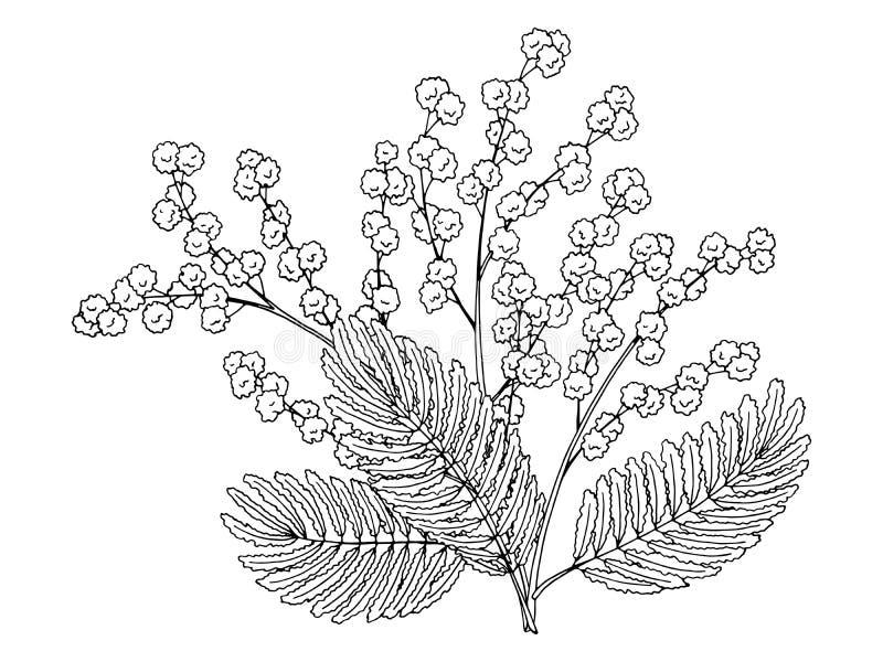 Картинка раскраска веточка мимозы