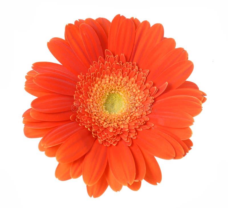 белизна цветка предпосылки стоковая фотография rf