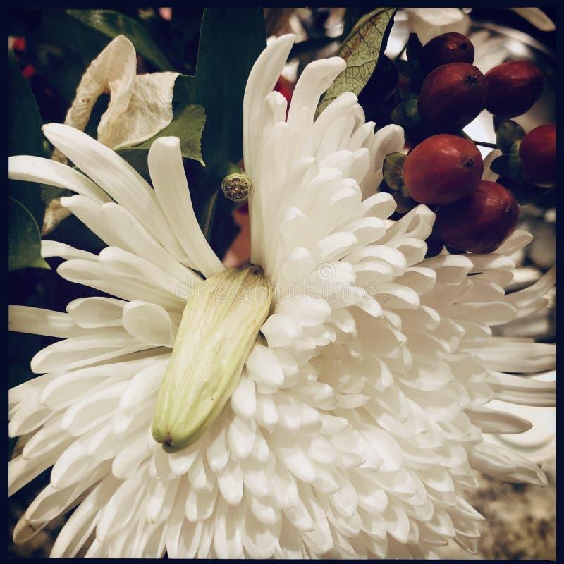 белизна цветка стоковое изображение rf