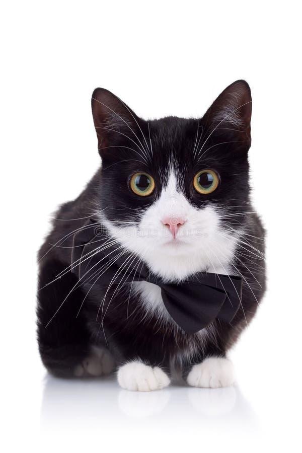 белизна черного кота милая стоковые фотографии rf
