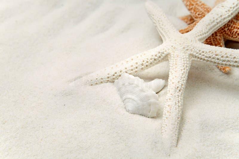 белизна starfish песка стоковое фото