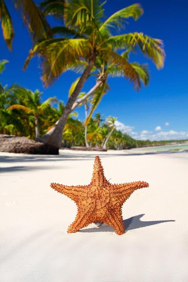 белизна starfish песка стоковые фотографии rf