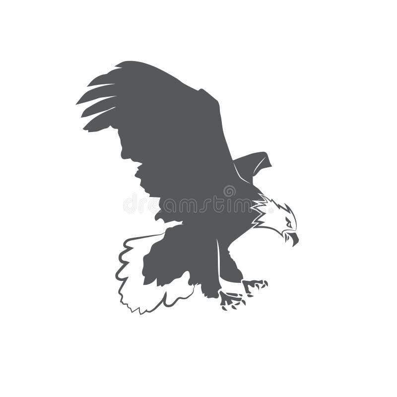 Белоголовый орлан изолированный на белой предпосылке бесплатная иллюстрация