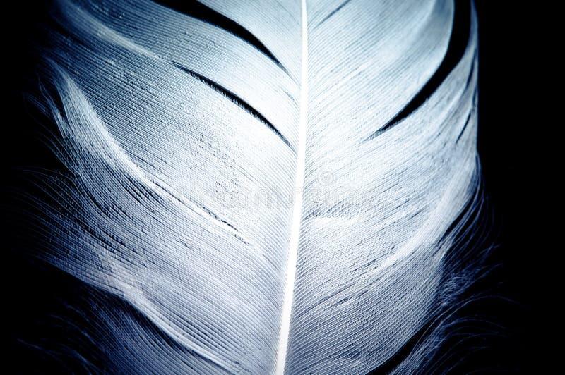 Белое голубое ангеликовое нежное перо над черным backround стоковая фотография rf