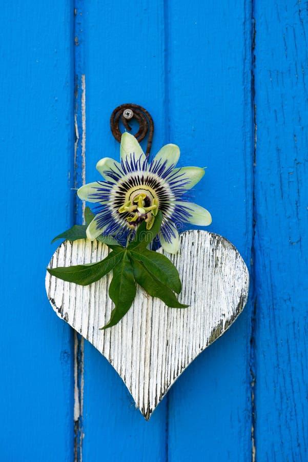 Белое деревянное сердце с цветком страсти на голубой предпосылке стоковые фото