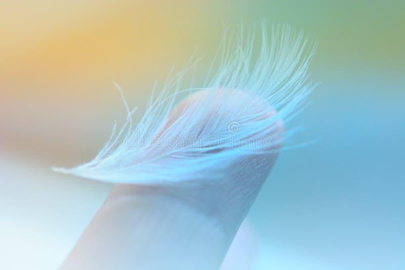 Белое перо на кончике пальца стоковое фото rf
