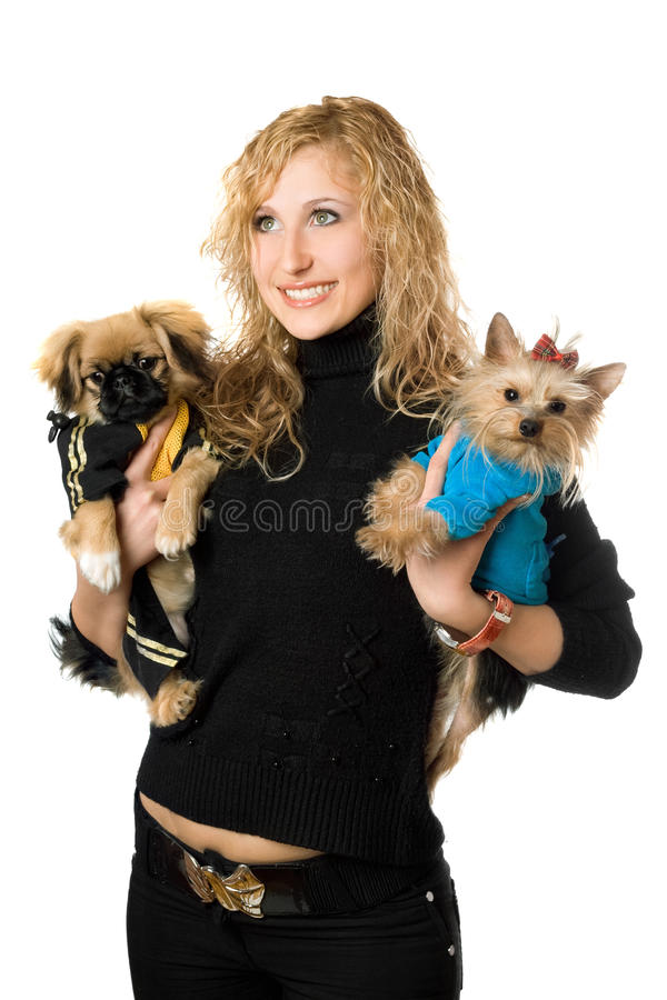 белокурые жизнерадостные детеныши портрета 2 собак стоковые фотографии rf