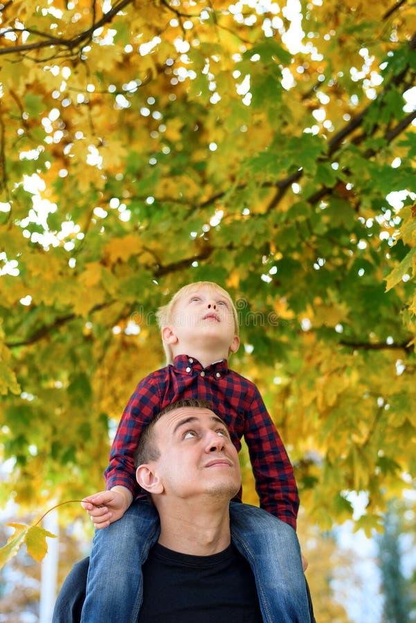 Белокурый мальчик в рубашке шотландки сидит на плечах его отца Посмотрите вверх Концепция осени стоковая фотография rf