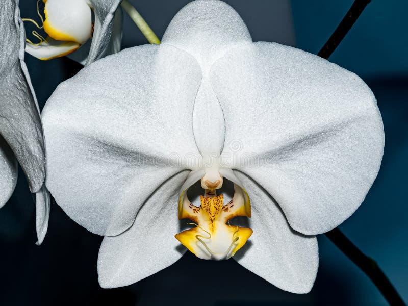 Белоорхидное цветочное лицо с улыбкой стоковое изображение