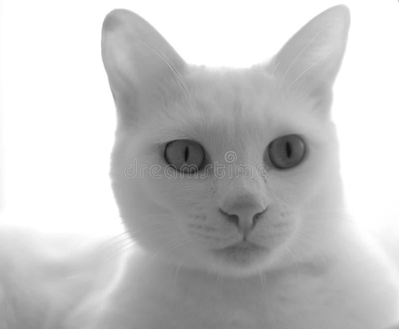 бело стоковое фото rf