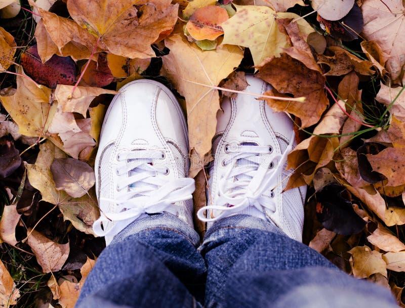 Белые ботинки спорта в листьях осени Предпосылка сезона падения стоковая фотография rf