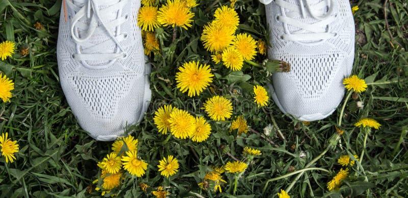 Белые ботинки спорта в траве и одуванчиках стоковые изображения rf