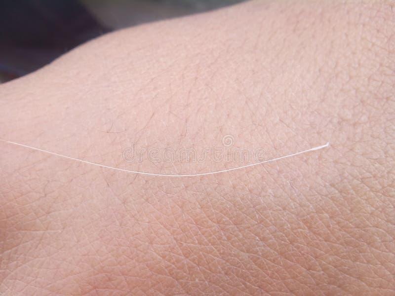 Белые волосы стоковое фото