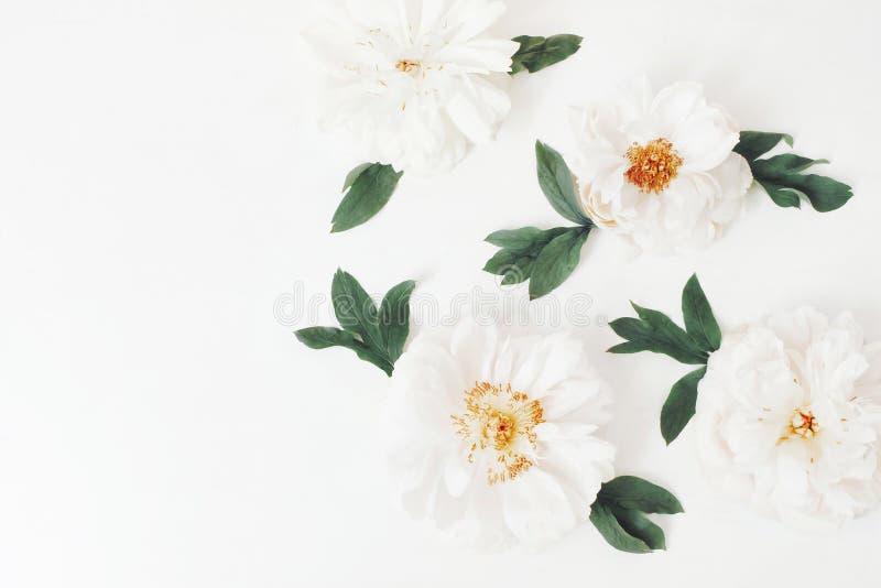 Белые головы и листья цветка пиона изолированные на белой предпосылке таблицы o Цветочный узор, угол стоковая фотография rf