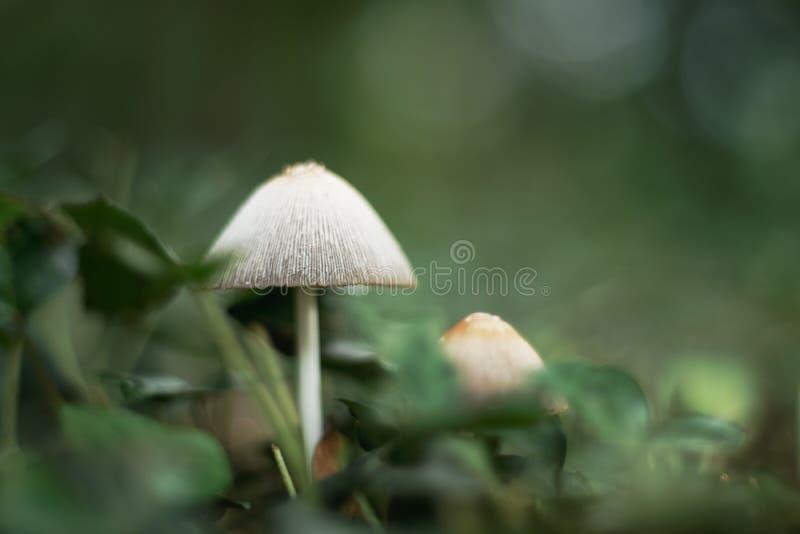 Белые грибы в лесе стоковое изображение rf
