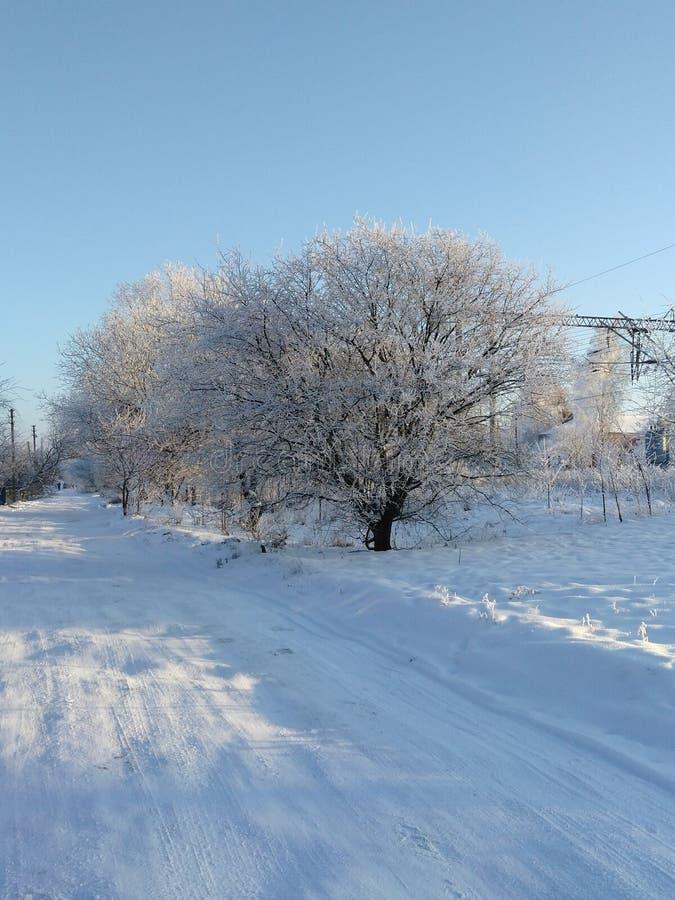 Белые деревья на Украине стоковое изображение rf