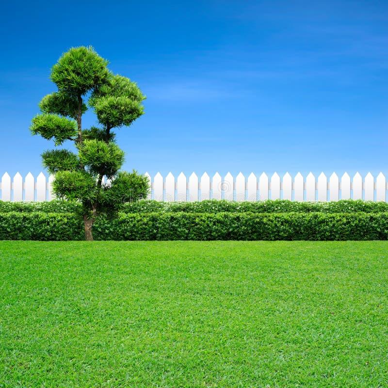 Белые загородка и дерево стоковое изображение rf