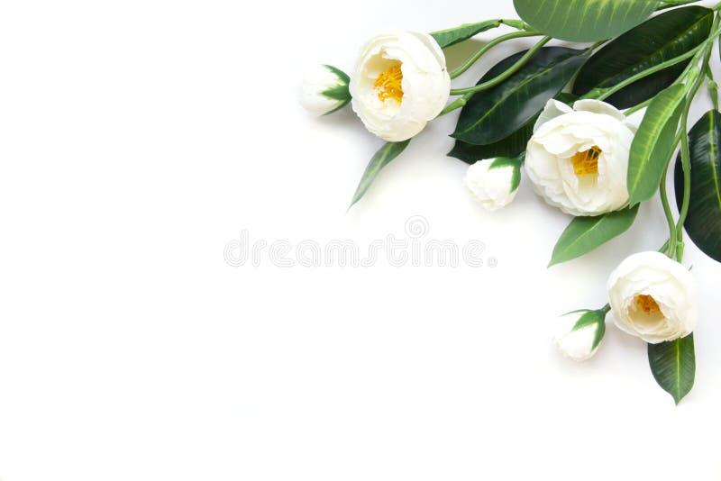 Белые искусственные цветки на белой предпосылке стоковые изображения