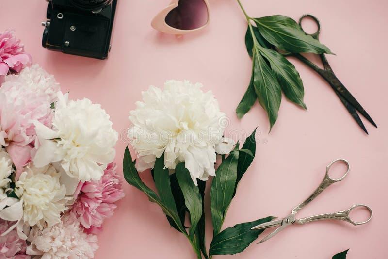 Белые и розовые букет и ножницы пионов на пастельной розовой бумаге Женственная квартира кладет с космосом экземпляра Здравствуйт стоковые изображения rf