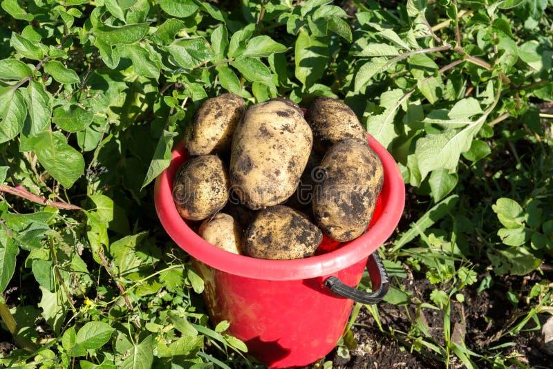 картинки сбор последней картошки пренебрегать этими
