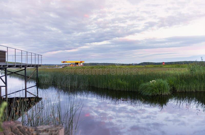 Белые ночи на финском заливе, небо с облаками сирени над водой с тростником стоковое изображение