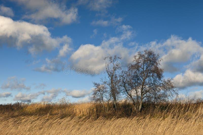 Белые облака кумулюса в голубом небе к день, естественная предпосылка, небо, день, облака, вода, озеро стоковые изображения rf