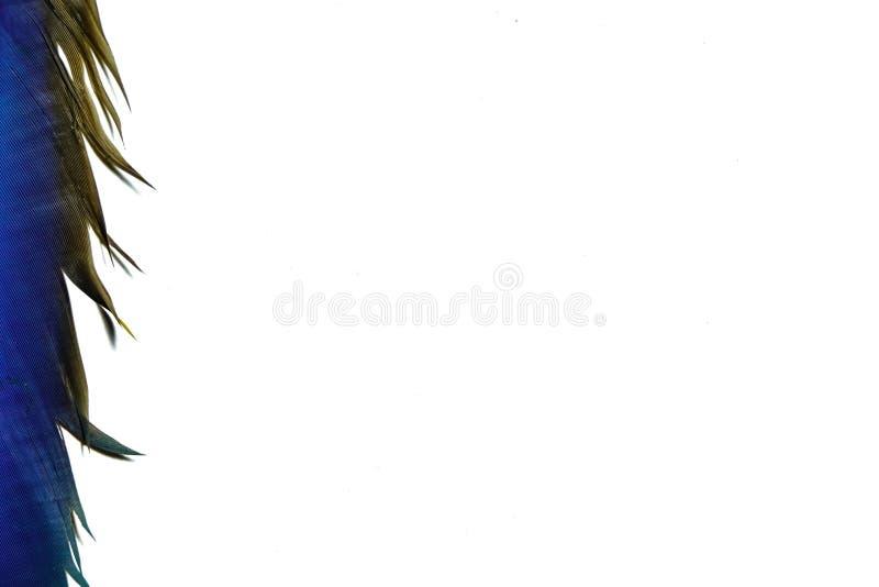 Белые оперенные крылья ары на белой предпосылке стоковое изображение
