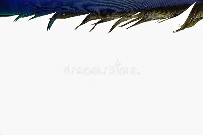 Белые оперенные крылья ары на белой предпосылке стоковая фотография rf