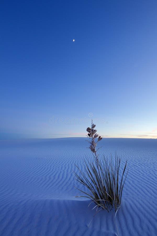 Белые пески на ноче стоковые изображения rf