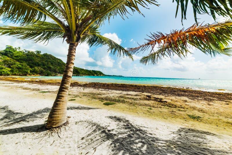 Белые песок и пальмы в пляже Pointe de Ла Соляной в Гваделупе стоковые фотографии rf