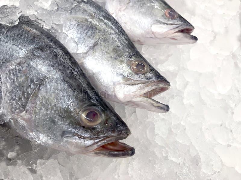Белые рыбы луциана, сырцовый свежий белый луциан, который замерли в фокусе супермаркета селективном стоковое изображение rf