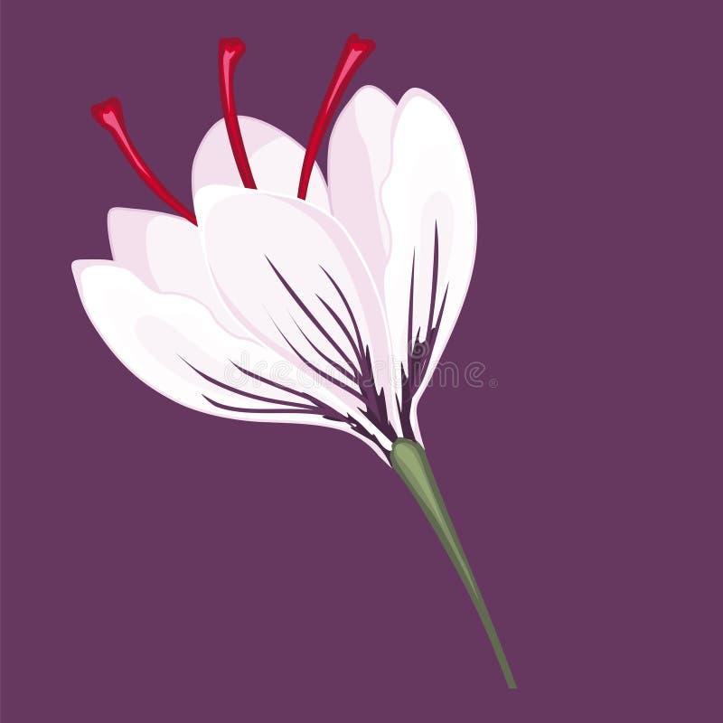 Белые цветения крокуса шток померанца иллюстрации предпосылки яркий бесплатная иллюстрация