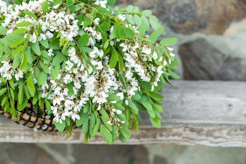 Белые цветки акации с листьями лежат в плетеной корзине стоковое изображение rf