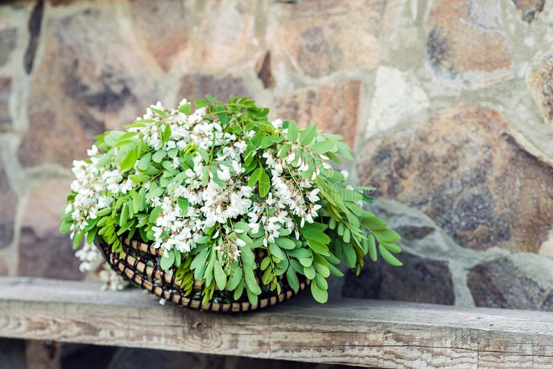 Белые цветки акации с листьями лежат в плетеной корзине стоковая фотография