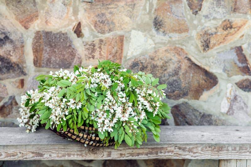 Белые цветки акации с листьями лежат в плетеной корзине стоковое фото rf