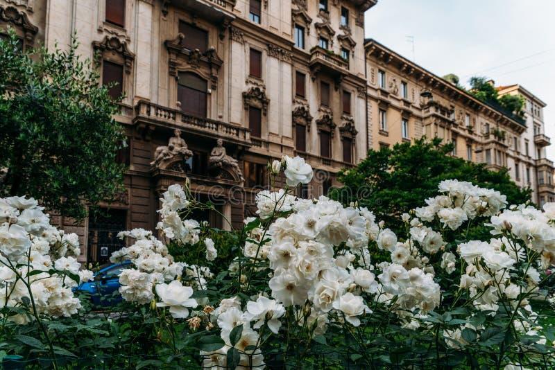 Белые цветки на переднем плане архитектуры Nouveau искусства в районе ` s Porta Venezia милана, Ломбардии, Италии стоковое фото rf