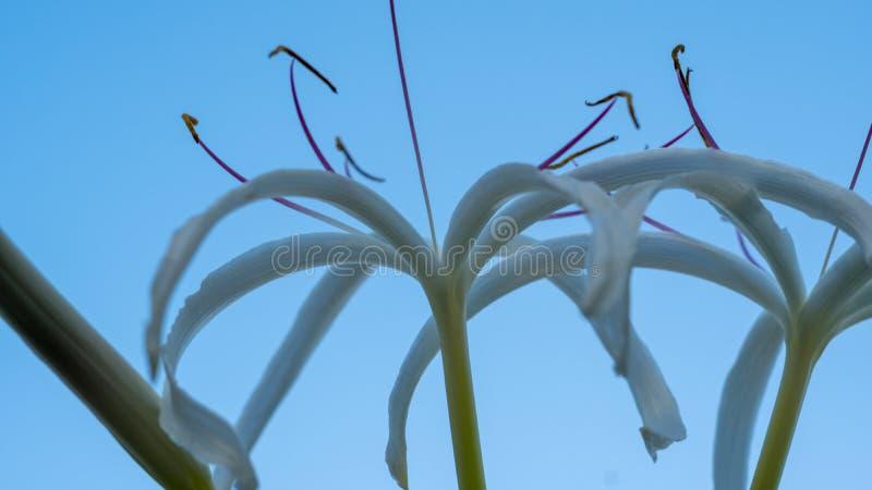 Белые цветки против утихомиривая голубого неба стоковое фото rf